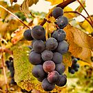 Grapes by Penny Rinker