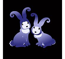 Two Night Bunnies  Photographic Print