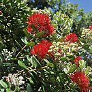 Pohutukawa Tree by Heather Thorsen