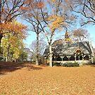 Autumn Leaves, Autumn Foliage, Central Park, New York City by lenspiro