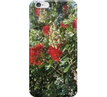 Pohutukawa Tree iPhone Case/Skin