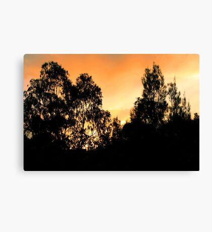 Sunset behind dark trees Canvas Print