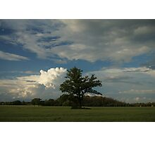 Tree in a field Photographic Print