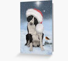 Border Collie - Christmas Card Greeting Card
