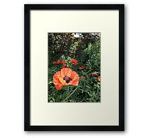 Scarlet Purse of Dreams Framed Print