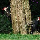 TWO PILIATED WOODPECKERS by Diane Peresie