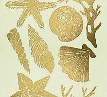 Gold Seashells by Cat Coquillette