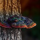 Mushroom Tree at Sunset by Masha-Gr
