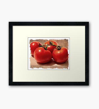 Vintage Grunge Tomatoes Framed Print