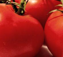 Vintage Grunge Tomatoes Sticker
