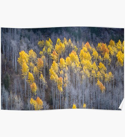 Autumn in Utah's Unita National Forest Poster