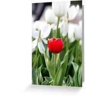 Single red tulip in a sea of white Greeting Card