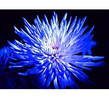 Feeling blue... Photographic Print