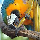 Feather Lickin' Good by Terri~Lynn Bealle