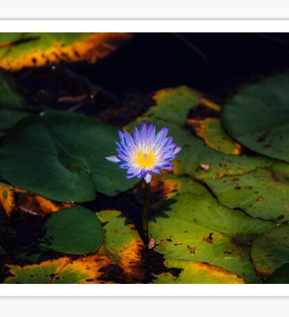 Purple Lotus Sticker