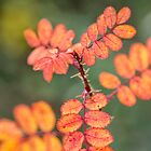 Bilberry Autumn Leaves by M.S. Photography/Art