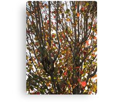 Tree With Leaves Canvas Print