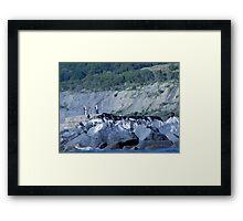 Cormorants On The Rocks............ Framed Print