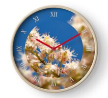 Macro of Aesculus blossoms  Clock