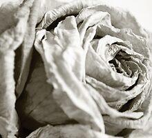 Silken by Sarah Cowan