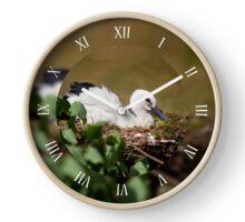 Orphaned White Stork sitting Clock