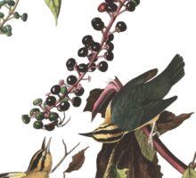 Worm-eating Warbler - John James Audubon Sticker