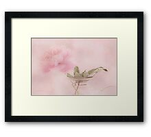 Pink Peony Blossom In Clear Glass Tea Pot  Framed Print