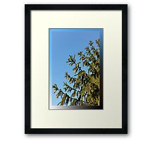 Tree for Christmas Framed Print
