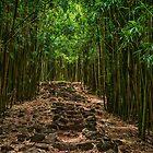 Bamboo Path by Karen  Burgess