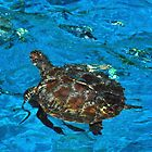 Turtle on the Surface by missmoneypenny