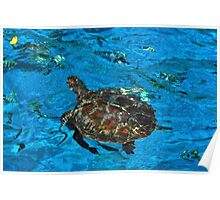 Turtle on the Surface Poster