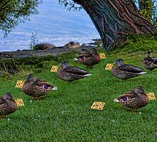 I LUV MY CRACKERS>>QUACKERS AND CRACKERS (DUCKS)>> PICTURE AND OR CARD by ✿✿ Bonita ✿✿ ђєℓℓσ