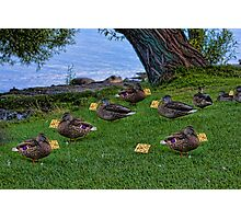 I LUV MY CRACKERS>>QUACKERS AND CRACKERS (DUCKS)>> PICTURE AND OR CARD Photographic Print