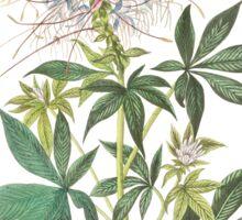 Rufous Hummingbird - John James Audubon Sticker