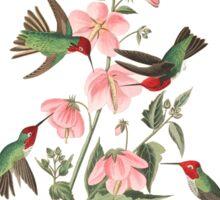 Anna's Hummingbird - John James Audubon  Sticker