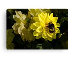 The Busy Bumble Canvas Print