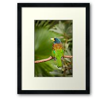 Exotic colorful bird Framed Print