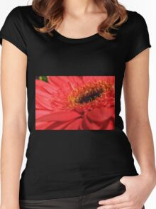 Brilliant macro photograph Gerber Daisy  Women's Fitted Scoop T-Shirt