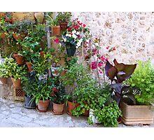 The Corner Plants.....................................Majorca Photographic Print