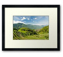 Rice fields in china Framed Print