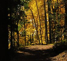Path thru the woods...near Cripple Creek, Colorado by dfrahm