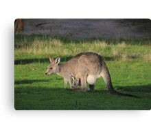 Eastern Grey Kangaroo and Joey Canvas Print