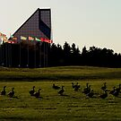 Canada Geese at The Royal Canadian Mint by Stephen Thomas