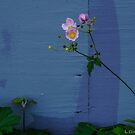 Pinks & Purples by Honario