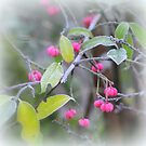 """"""" Spindle Berry Pink """" by Richard Couchman"""