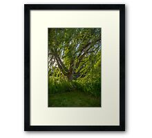 Windy Willow Framed Print