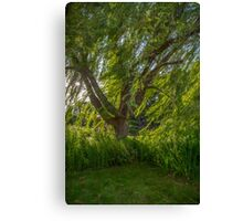 Windy Willow Canvas Print
