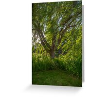 Windy Willow Greeting Card