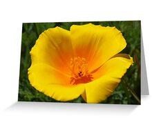 Big Poppy Flower Golden Orange Yellow Silky Greeting Card