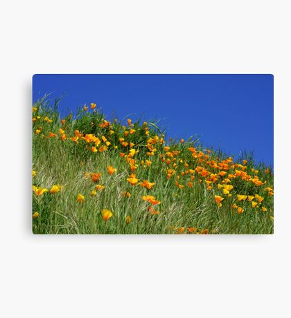 Poppy Flowers Meadow Blue Sky Green Hillside Art Canvas Print